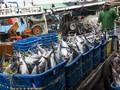 Genjot Ekspor Ikan, Pemerintah Siapkan 15 Pelabuhan Baru