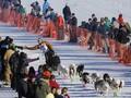 Iditarod, Aksi Heroik yang Jadi Tradisi