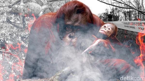 Tragedi Orangutan di Kalimantan