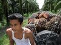 Indonesia Bersiap Pangkas Pasokan Minyak Sawit Dunia