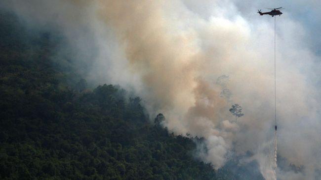 Bakar Hutan, Perusahaan Dihukum Ganti Rugi Rp1 Triliun