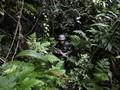 Masyarakat di Perbatasan RI Akan Diberi Latihan Militer