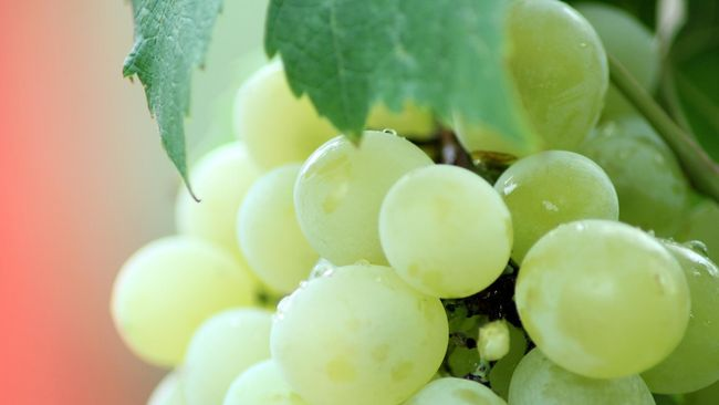 Ambisi Georgia Tanam Anggur untuk Buat Wine di Mars