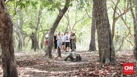 Menteri LHK Pertimbangkan Penutupan Taman Nasional Komodo