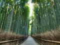 'Wajah' Hutan Hijau yang Meneduhkan di Berbagai Belahan Dunia