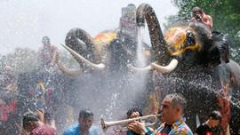 Kawanan Gajah Meriahkan Songkran di Ayutthaya
