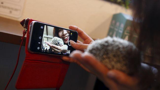 Ulama Saudi Haramkan Selfie dengan Kucing