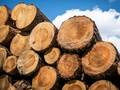OJK Janji Kaji Dampak Kredit Bank Terhadap Lingkungan