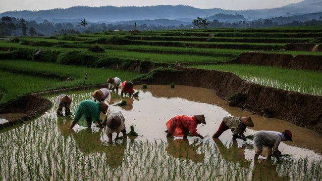 Lahan Pertanian Di Indonesia Makin Tak Menarik Bagi Pekerja
