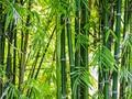 Produk Ramah Lingkungan dari Bambu, Sikat Gigi sampai Sedotan