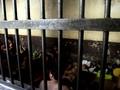 13 Tahanan Penjebol Sel Mapolres Palembang Masih Buron