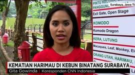 Kematian Harimau di Kebun Binatang Surabaya
