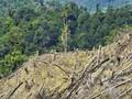 Pembukaan Lahan Masif, Moratorium Hutan Dinilai Tak Efektif