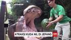 Kelucuan Atraksi Kuda Nil di Jepang