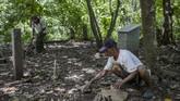 Sukar rutin membersihkan lokasi di sekitar batu nisan di Hutan Plumbon. Batu nisan dibangun oleh aktivis dan keluarga yang merasa kehilangan orang tercintanya saat tragedi 1965 pecah. (Getty Images/Ulet Ifansasti)