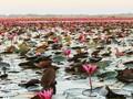 Mengunjungi Danau 'Cinta Tak Berbalas' di Thailand