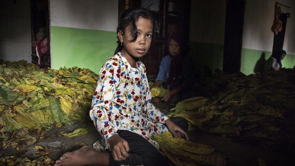 Foto Miris Pekerja Anak di Ladang Tembakau yang Rentan Keracunan Nikotin