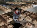 Mengintip Pabrik Pembuat Topeng Donald Trump di China