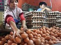 Jelang Puasa, Harga Telur dan Ayam Sudah Merangkak Naik