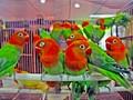 Lepas Penat Bercengkrama dengan Kicau Burung