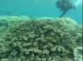 Nasib Great Barrier Reef Semakin Terancam
