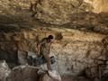 Arkeolog Temukan Tulang Hewan Purba Berusia 350.000 Tahun