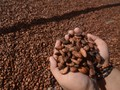 Ragam Manfaat Lemak Kakao untuk Kulit