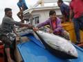 Jepang Sodorkan RI Teknologi Budidaya Tuna Laut Dalam
