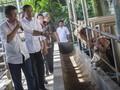 Izin Mandeg di Mendag, Importir Sapi Kritik Paket Kebijakan