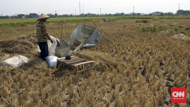 Petani Sebut Serapan Beras Bulog Tidak Maksimal