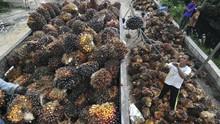 Pemerintah Lobi China Ganti Minyak Kedelai dengan CPO RI