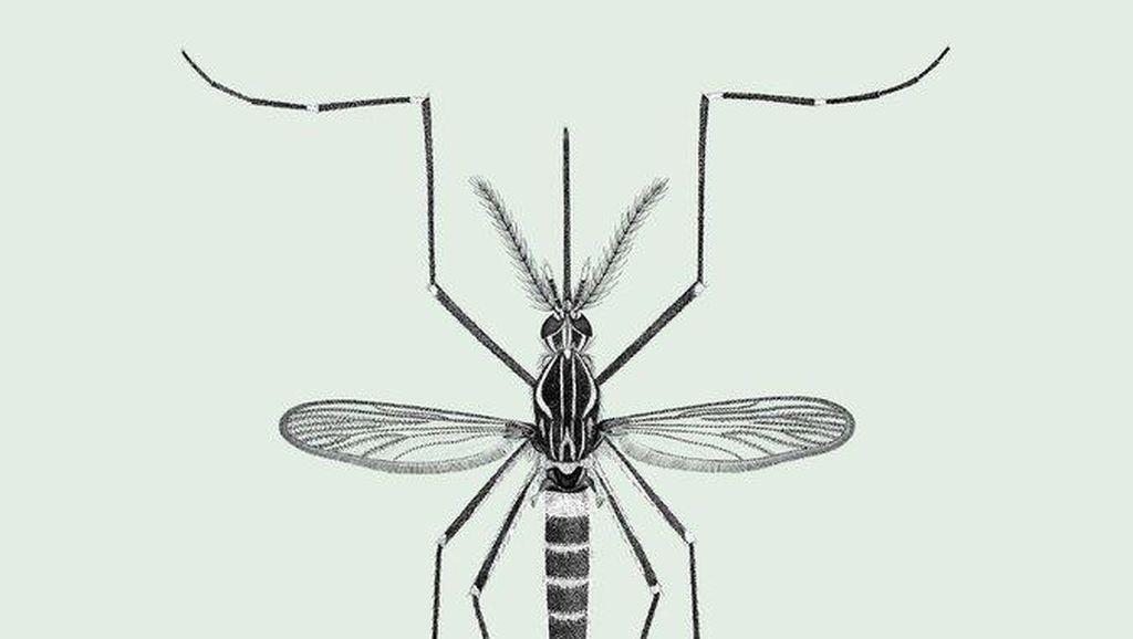 6 Spesies Nyamuk Paling Berbahaya di Dunia