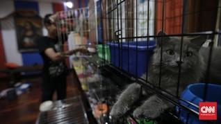 Penipuan Jual Hewan Peliharaan di Australia Marak Saat Corona