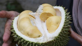 Tiru Pisang Lakban, Toko di Singapura Pasang Durian 'Lakban'