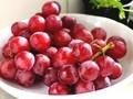 Harga Fantastis Seikat Anggur di Jepang Rp141 Juta