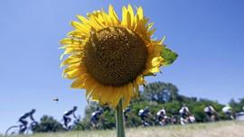 8 Bunga yang Bisa Dikonsumsi dan Bermanfaat untuk Tubuh