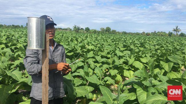 Tarif Cukai Naik, Petani dan Industri Rokok Bisa Merugi