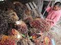 Pemerintah Diminta 'Pede' Susun Standar Perdagangan Sawit