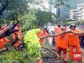 Pohon Tumbang di Jakarta Timpa Rumah, Kabel Listrik, Mobil
