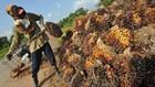 US$3,89 Miliar Kredit Bank Membawa Malapetaka Bagi Lingkungan