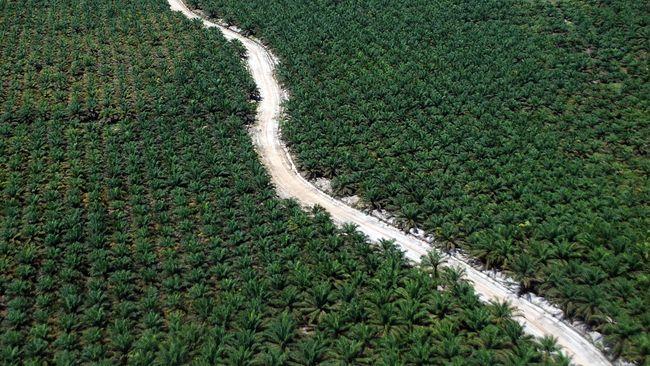 Peneliti: Perkebunan Sawit Dominasi Konflik Tanah