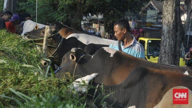 Warga Sekitar Venue Pacuan Kuda Dilarang Potong Hewan Kurban