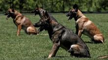Anjing Pelacak Hibah AS untuk Yordania Tak Terurus