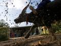 Festival Pchum Ben, Persembahan bagi Leluhur Kamboja