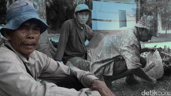 Balada Kakek Cangkul