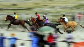 Memacu Adrenalin ala Pacu Kude Gayo