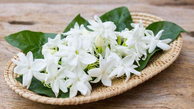 Manfaat Bunga Melati Baik Sekali untuk Kecantikan