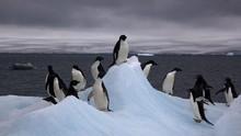 7 Pulau untuk Menyaksikan Kehidupan Alam Liar