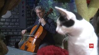 Musik yang Memanjakan Kuping Kucing