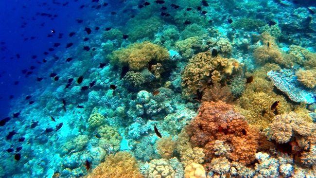 Indonesia-Singapura Temukan 12 Spesies Baru Bawah Laut